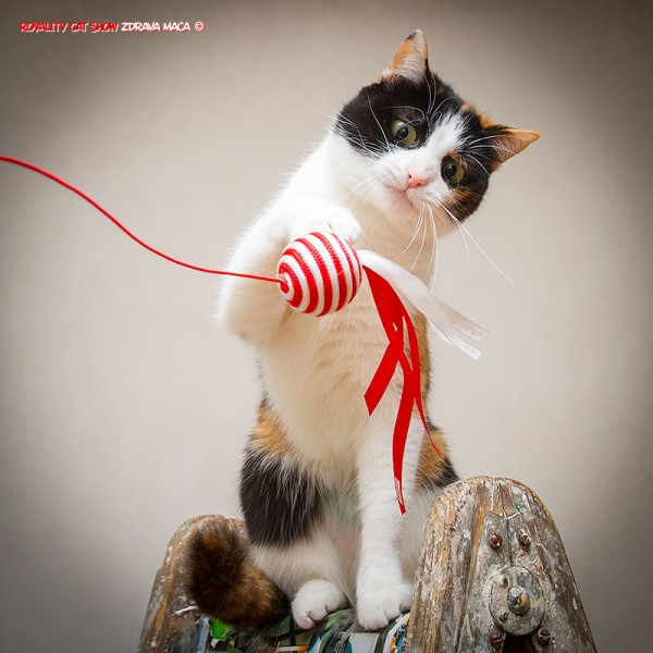 Royal Canin poklon igračka! Volim to :)