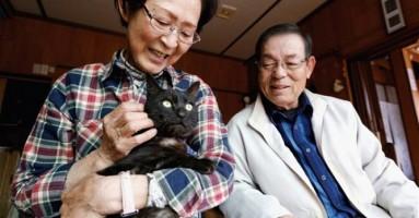 Mačka izgubljena u cunamiju 2011. vraćena vlasnicima