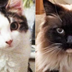 """Otvorena prva forenzička laboratorija koja se """"loviti"""" serijskog ubicu mačaka"""
