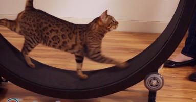Točak za trčanje za vašu mačku!? (VIDEO)