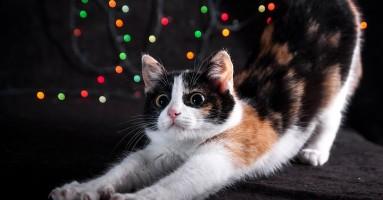 Zašto se mačke tako često protežu?