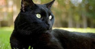 Predrasude o mačkama