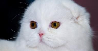 Sterilizacija i kastracija mačaka
