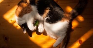 Zašto mačke kriju da ih nešto boli?