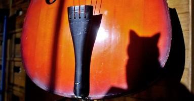Muzika za mačke!