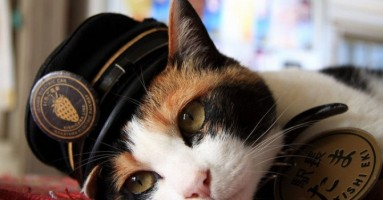 Mačka Tama proglašena boginjom u Japanu!