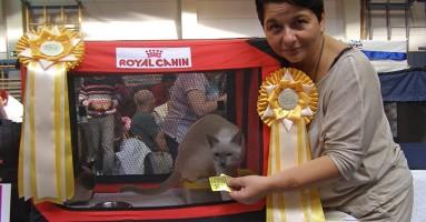 "Izložba mačaka ""Great Catsby"" (FOTO)"