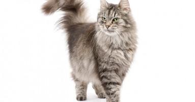 Stres kod mačaka - i šta možete učiniti da ga smanjite?