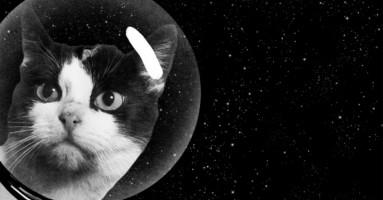 Zaboravljena tajna prve mačke u svemiru!