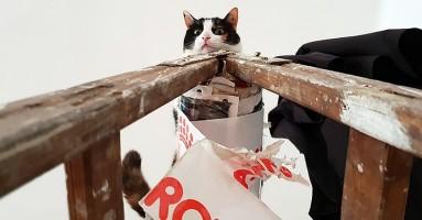 Mačke su zapravo dobre, utvrdili naučnici!