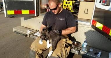 Mačak preživeo jeziv požar krijući se u rerni (FOTO/VIDEO)