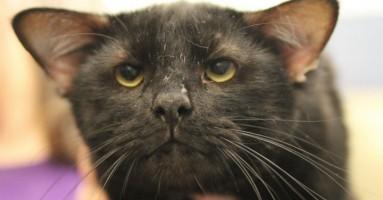 Crni mačak sa 4 uveta konačno našao dom!