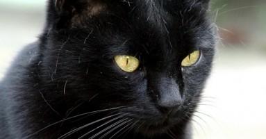 Zdravlje mačke - šta je normalno?