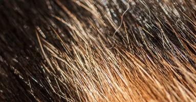 Mačka i izbacivanje progutane dlake