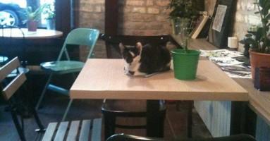 Kafić na Dorćolu usvojio mačora :)