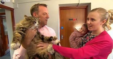 Izgubljena mačka vraćena vlasnicima posle 16 meseci!