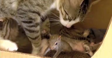 Mačka usvojila vevericu