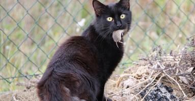 Mačke vode hemijski rat protiv miševa!
