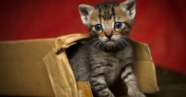 10 zanimljivosti o tek rođenim mačićima
