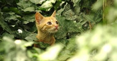 Zašto mačke donose kući ulovljene životinje?