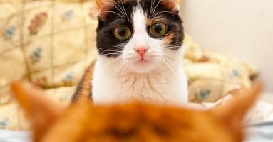 Kako vaša mačka doživljava svet oko sebe?