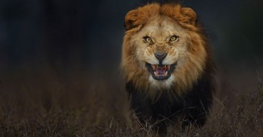 Ne diraj lava dok spava ... a ni inače! :)))