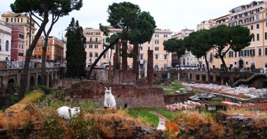 5 destinacija gde mačke zasenjuju turističke atrakcije!