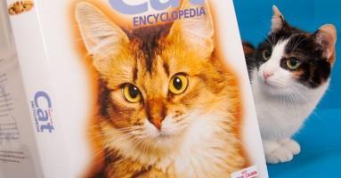 Mačke verovatno razumeju uzrok i posledicu, pokazuje najnovije istraživanje!