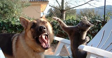 Zašto se mačke i psi ne vole?