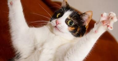 Otkrivamo: zašto mačke vladaju internetom?