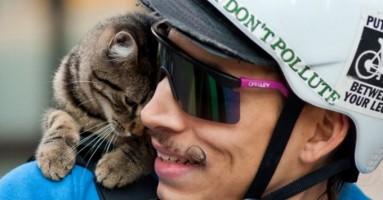 Mačka na biciklu? O, da...