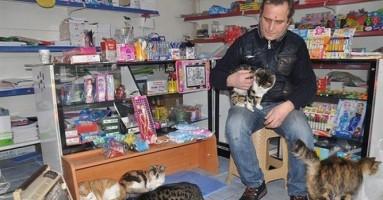 Čovek pretvorio prodavnicu u zimsko sklonište za mačke!