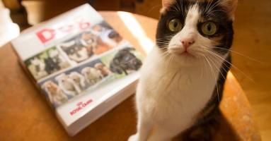 Vlasnici mačaka pametniji od vlasnika pasa?