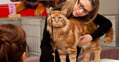 Izložba mačaka u Beogradu 2012