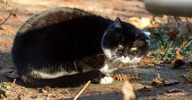 Kako prepoznati da vaša mačka trpi bol