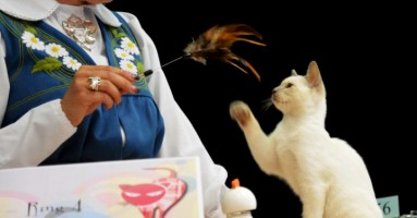 """Izložba mačaka """"Veličanstvene pedesete"""""""
