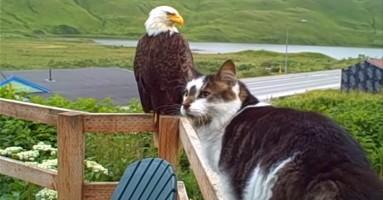 Mačke i orlovi - neočekivano društvo