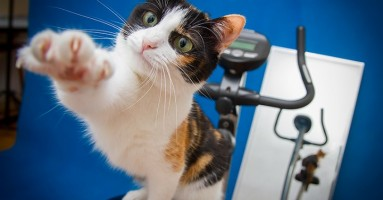 Leva ili desna šapa, koju vaša mačka više koristi?