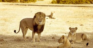 NEVERICA: Lovci ubili i brata lava Sesila!